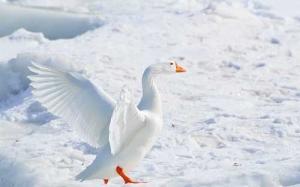 Die digitale Fototechnik unterstützt den Fotografen beim Gelingen seines fotografischen Werkes - z.B. beim Fotografieren im Schnee
